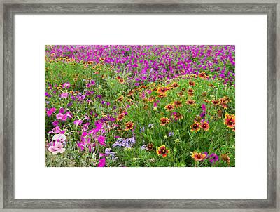 Garden Delight Framed Print by Lynn Bauer
