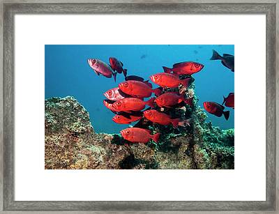 Goggle Eyes On A Reef Framed Print by Georgette Douwma