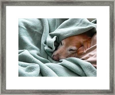 Golden Retriever Dog Under The Blanket Framed Print by Jennie Marie Schell