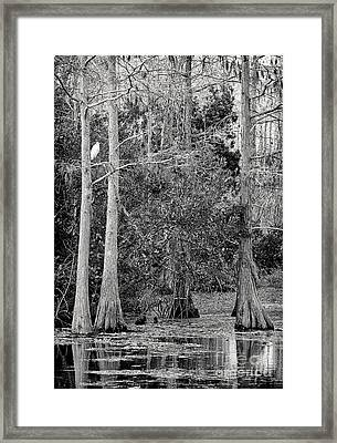 Grassy Waters Framed Print by Bruce Bain