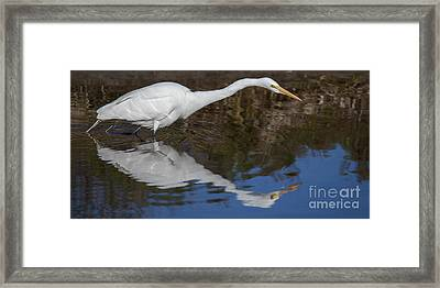 Great Egret Framed Print by Twenty Two North Photography