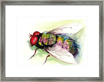 Green Fly Original Watercolor Framed Print by Tiberiu Soos