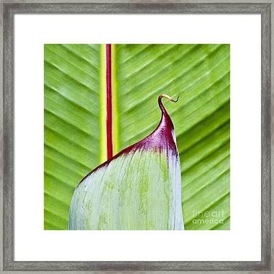 Green Leaves Framed Print by Heiko Koehrer-Wagner