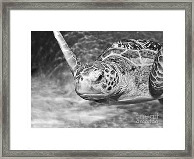 Green Sea Turtle. Framed Print by Jamie Pham