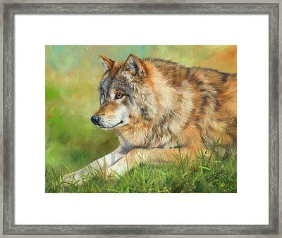 Grey Wolf Framed Print by David Stribbling