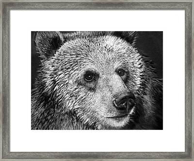 Grizzly Bear Framed Print by Sharlena Wood