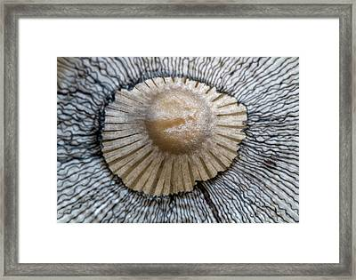 Hare's Foot Ink Cap Abstract Framed Print by Nigel Downer