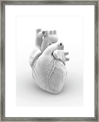 Heart And Coronary Arteries Framed Print by Alfred Pasieka