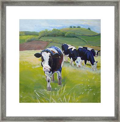 Holstein Friesian Cows Framed Print by Mike Jory