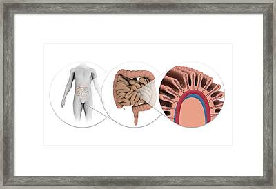 Human Intestines Framed Print by Mikkel Juul Jensen