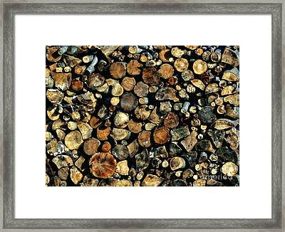 Hunkering Down Framed Print by Andrea Kollo