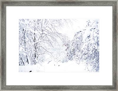 Hurricane Sandy Snow  Framed Print by Thomas R Fletcher