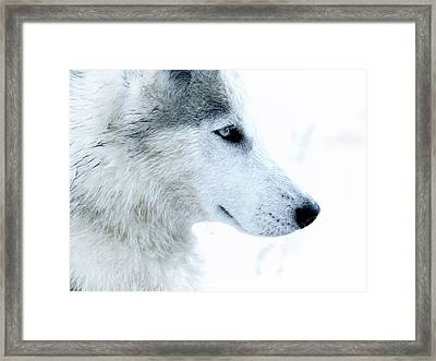 Husky Framed Print by Stelios Kleanthous
