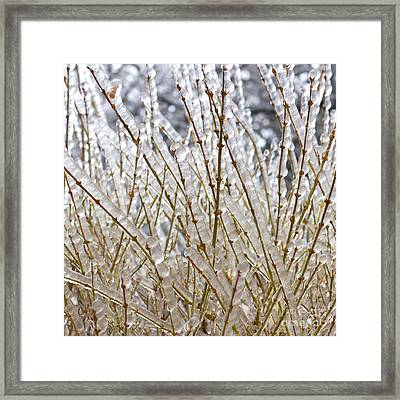 Ice On Branches Framed Print by Blink Images