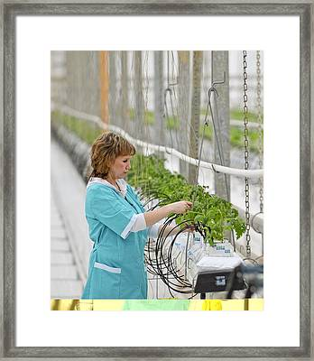 Industrial Greenhouse Framed Print by Science Photo Library