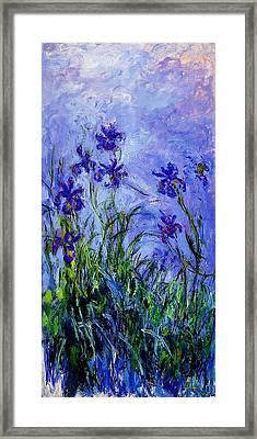 Irises Framed Print by Celestial Images