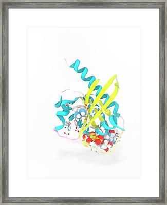 K-ras Benzamidine And Gtp Complex Framed Print by Ramon Andrade 3dciencia