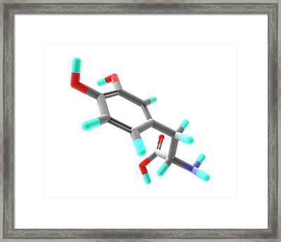 Levodopa Parkinson's Disease Drug Framed Print by Alfred Pasieka