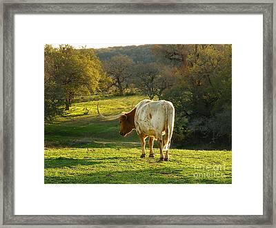 Longhorns Long Day Framed Print by Joe Jake Pratt