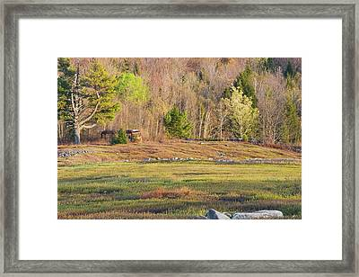 Maine Blueberry Field In Spring Framed Print by Keith Webber Jr