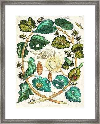 Metamorphosis Insectorum Framed Print by Pg Reproductions