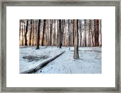 Morning Sun Framed Print by Andrea Galiffi