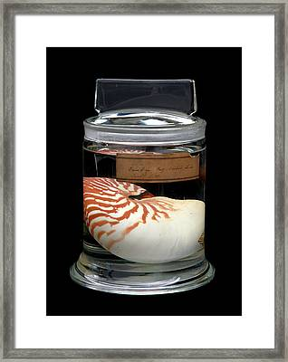 Nautilus Framed Print by Natural History Museum, London