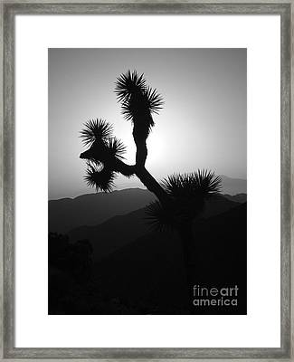 New Photographic Art Print For Sale Joshua Tree At Sunset Black And White Framed Print by Toula Mavridou-Messer