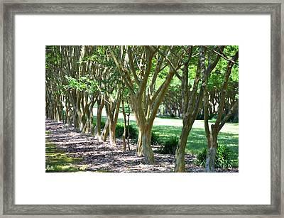 Norfolk Botanical Garden 6 Framed Print by Lanjee Chee
