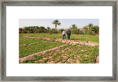 Oasis Maintenance Framed Print by Thierry Berrod, Mona Lisa Production