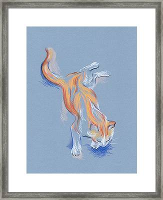 Orange And White Tabby Cat Framed Print by MM Anderson