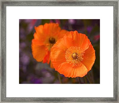 Orange Poppies Framed Print by Rona Black