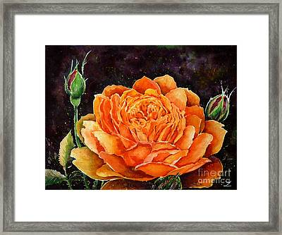 Orange Rose Framed Print by Zaira Dzhaubaeva