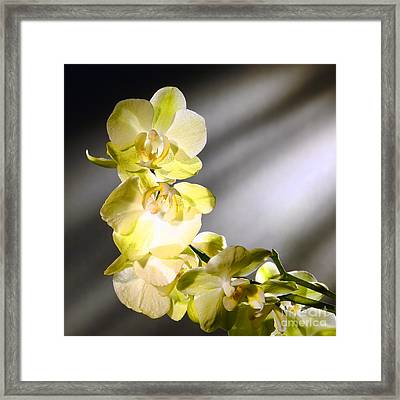 Orchid Flowers Framed Print by Olivier Le Queinec