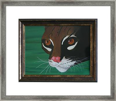 Oscelot Framed Print by Aileen Carruthers