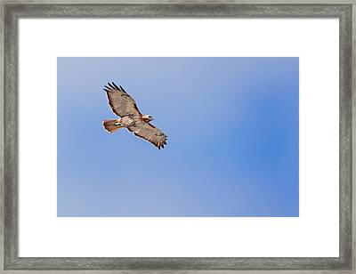 Out Of The Blue Framed Print by Bill Wakeley