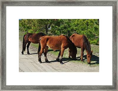 Outer Banks Wild Horses Framed Print by Mike Baltzgar