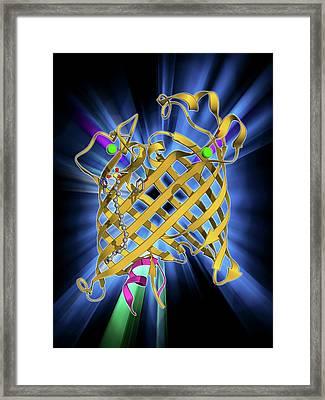 Outer Membrane Phospholipase A Molecule Framed Print by Laguna Design