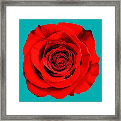 Painting Of Single Rose Framed Print by Setsiri Silapasuwanchai