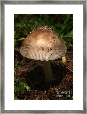 Parasol Mushroom Macrolepiota Sp Framed Print by Susan Leavines