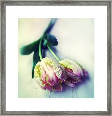 Pastel Petals Framed Print by Jessica Jenney