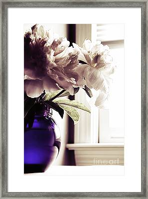 Peony Framed Print by HD Connelly
