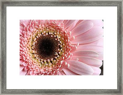 Pink Framed Print by JC Findley