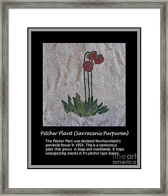 Pitcher Plant Framed Print by Barbara Griffin