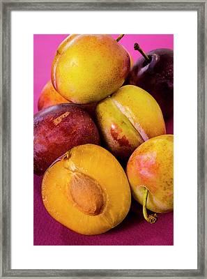 Plums Framed Print by Aberration Films Ltd