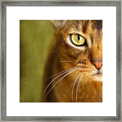 Portrait Of An Abyssinian Cat With Textures Framed Print by Wolf Shadow  Photography
