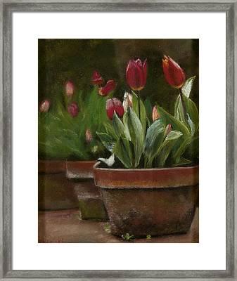 Potted Tulips Framed Print by Cindy Plutnicki