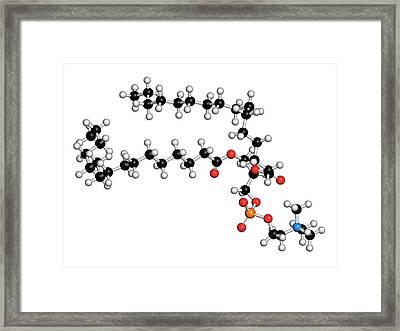 Pulmonary Surfactant Molecule Framed Print by Molekuul