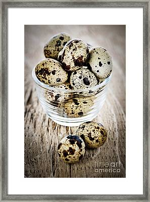 Quail Eggs Framed Print by Elena Elisseeva