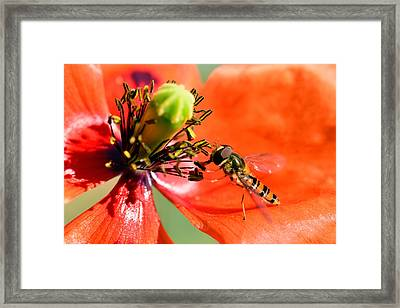 Red Flower  Framed Print by Toppart Sweden